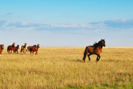 Впрограмме Казахстана «Сдипломом всело» смогут принять участие госслужащие республики